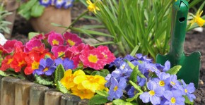 Memelio gėlės